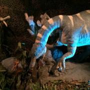 Dinosaur Encounter